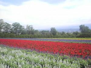 富良野富田ファーム20090804-002